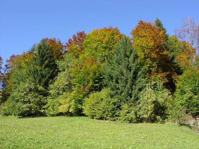 mixed forest, autumn, colorful, leaves, trees, forest
