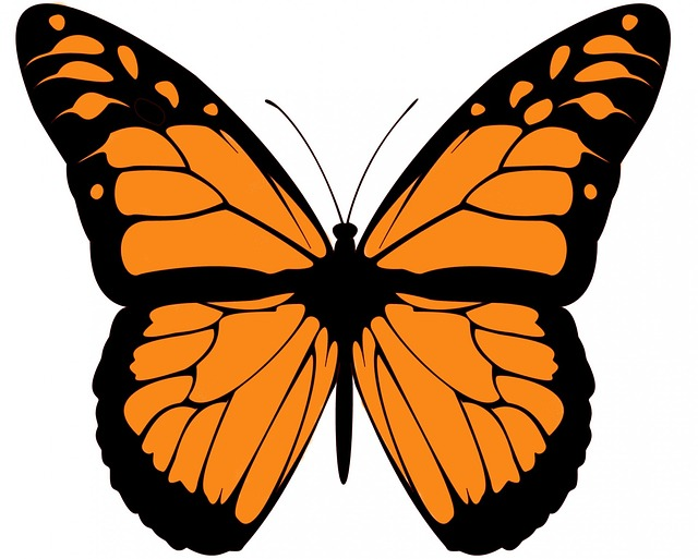 monarch, butterfly, clip art, large, beautiful