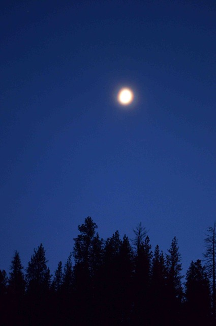 moon, landscape, tree, night, sky, blue, evening