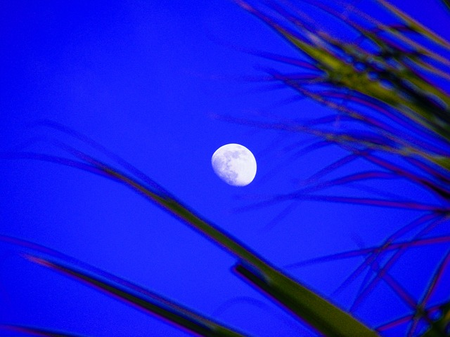 moon, moon shine, trees, sky, blue, mystical, light