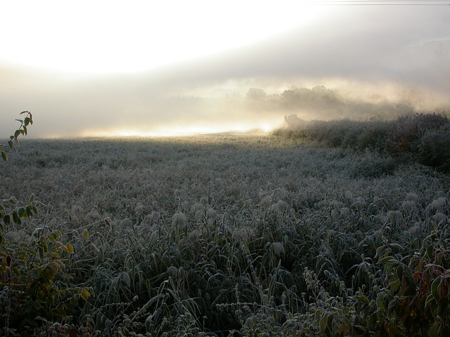 morning mist, winter mood, frost