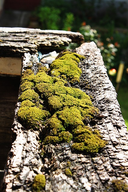 moss, balcony, plant, reine, air, air quality, green