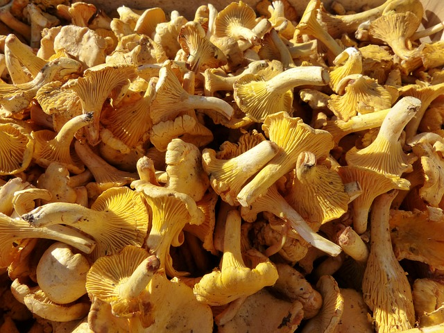 mushrooms, chanterelles, market, sale, food, vegetables