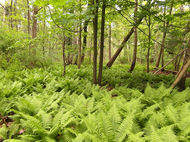nature reserve, moor, forest, fern, away, hiking