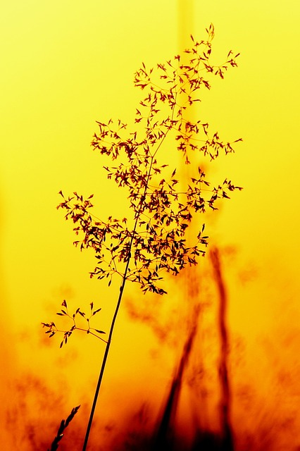 nature, silhouette, plant, light, light and shadow