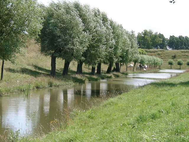nature, trees, water, natural water, holland