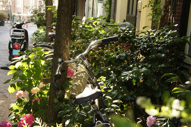 netherlands, bike, plant, summer, holiday, flowers
