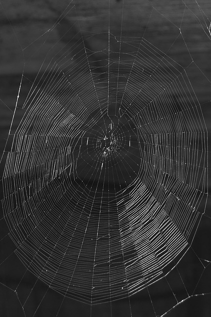 network, cobweb, threads, nature, black, white