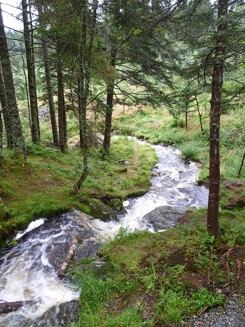 norway, stream, mountain, nature, forest, flowing