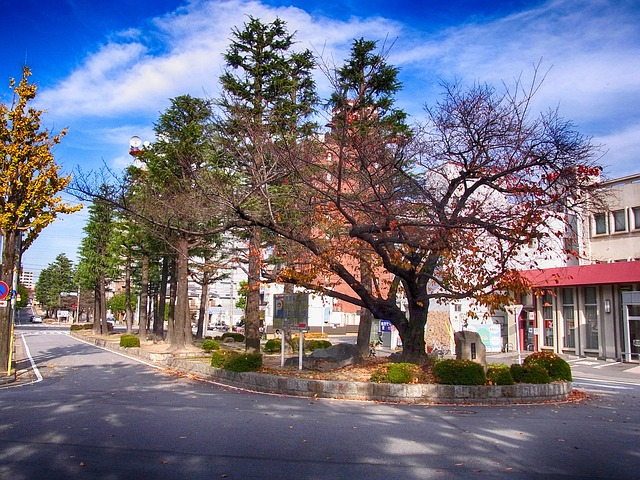 okazaki, japan, city, street, trees, outside, fall
