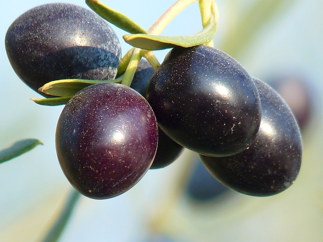 olives, fruit, olive tree, oelfrucht, olive branch