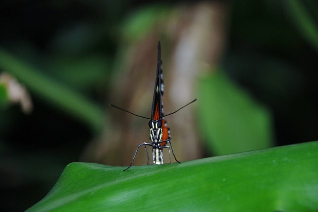 orange, butterfly, bug, insect, nature, colorful