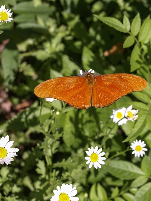 orange, butterfly, nature, insect, wild, flowers