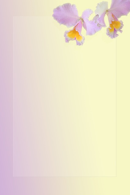 orchid, flower, fragile, yellow, lavender, corner