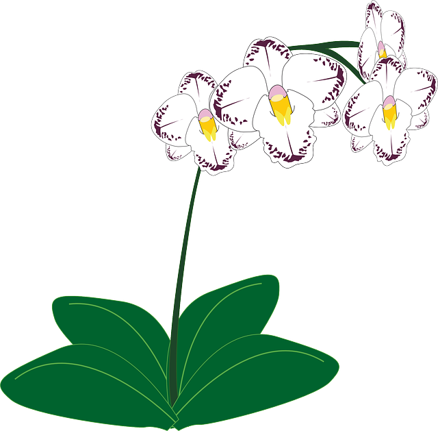 orchid, flower, white