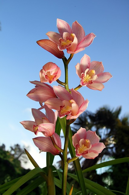 orchid, flowers, plant, pink, bloom, sky
