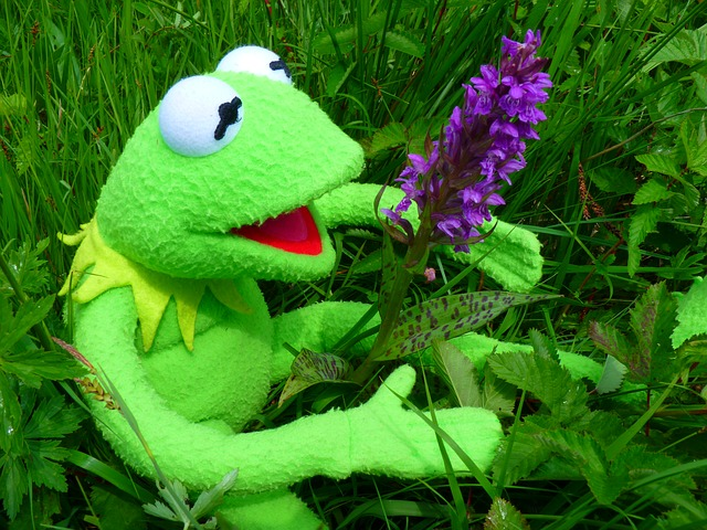 orchid, getuepfeltes, frog, kermit, green
