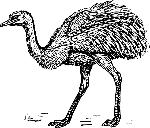 ostrich, animal, biology, bird, zoology