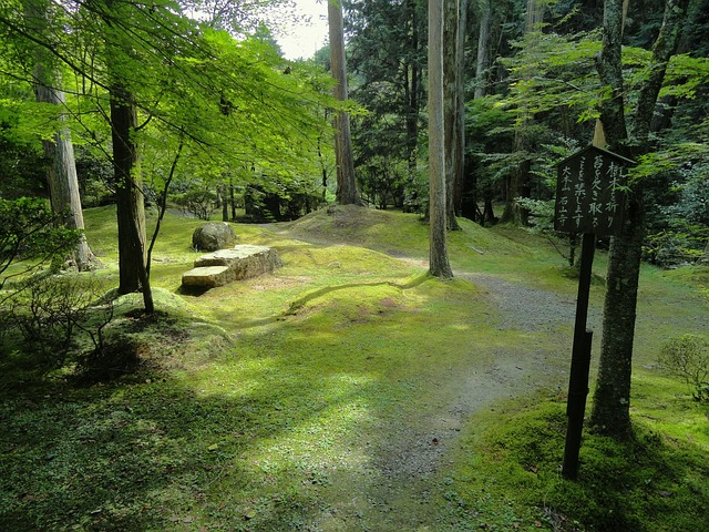 otsu, japan, landscape, forest, trees, woods, stones