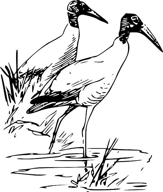outline, bird, wood, ibis, animal