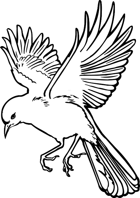 outline, drawing, bird, wings, art, landing, feathers