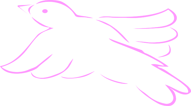 outline, pink, bird, dove, wings, art, feathers