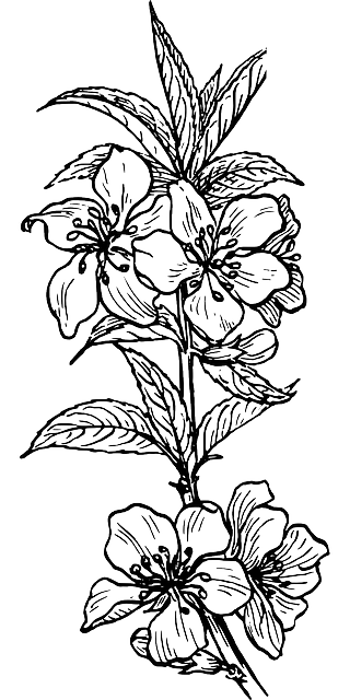 outline, plants, tree, flower, branch, plant, nut