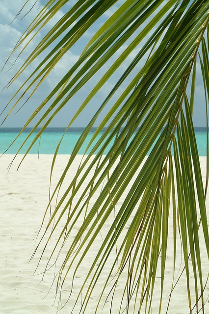 palm branch, maldives, sea, beach, palma