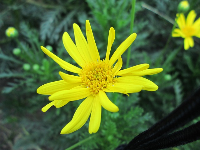 park, flower, garden, plant, yellow