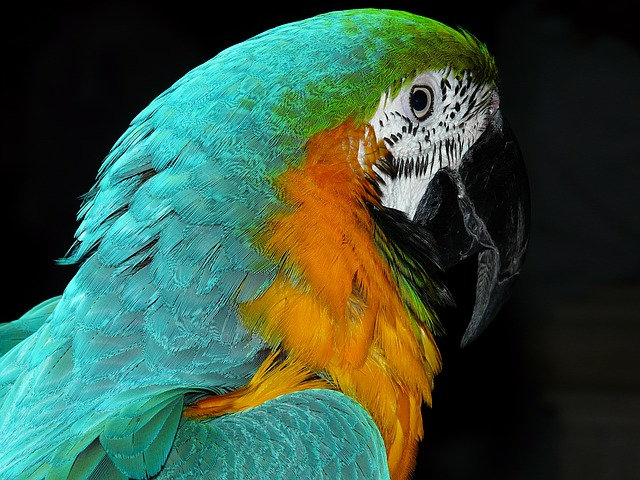 parrot, bird, animal, colorful, plumage, spring, color