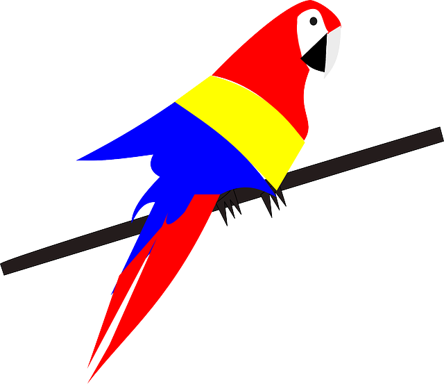 parrot, bird, exotic, tropical