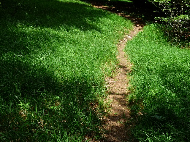 path, away, forest path, trail, wegchen, hike, hiking