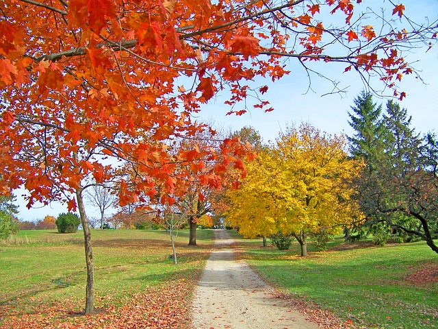 path, trees, autumn, fall, colored, leaves, park