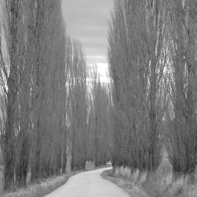 path, trees, road, series