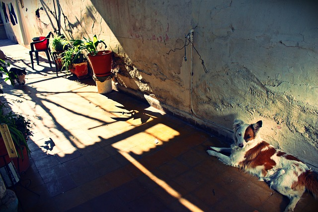 patio, old, dog, animals