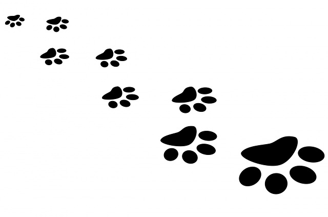 paw, print, cat, vector, footprint, bear, foot, track