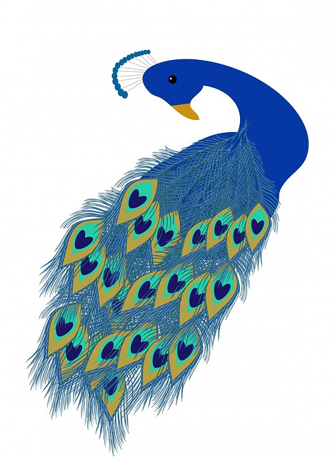 peacock, peafowl, bird, beautiful, art, illustration