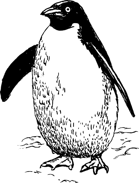 penguin, animal, biology, bird, ornithology, zoology