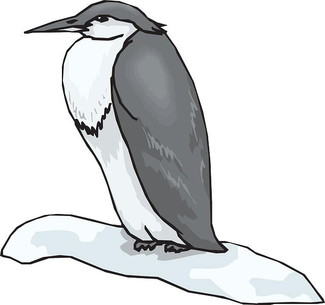 penguin, black, white, bird, snow, heron, feathers, and