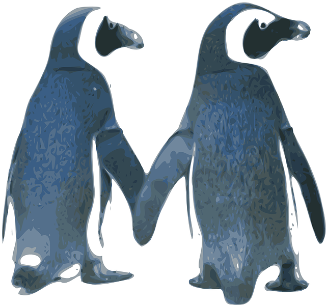 penguins, love, birds, couple, nature, tux, valentine