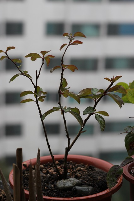 people tree, potted plant, flower, plants, apartments