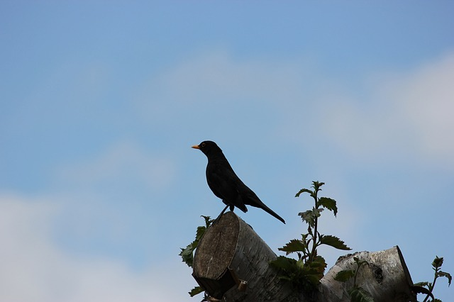 perch, perched, tree, bird, blackbird, crow, raven