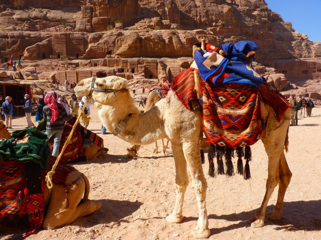 petra, jordan, holiday, travel, middle east, camel