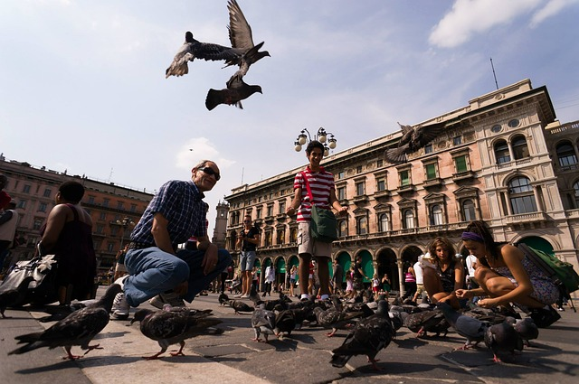 pigeons, marketplace, milan, birds, feather, wing, luck