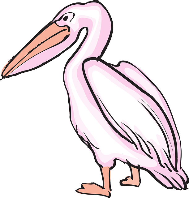 pink, bird, art, pelican, animal, beak, feathers