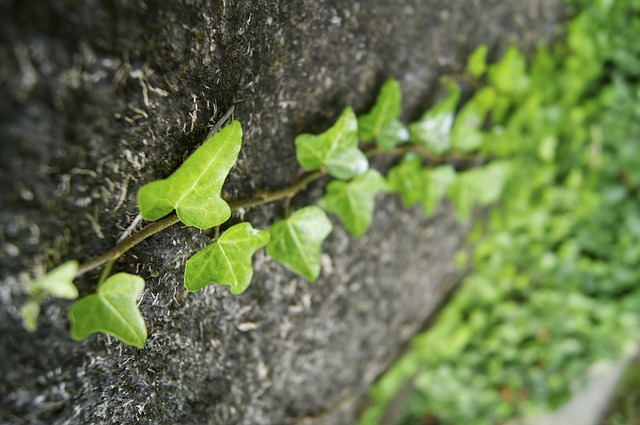 plant, green, overgrown, forest, nature, stone, climb