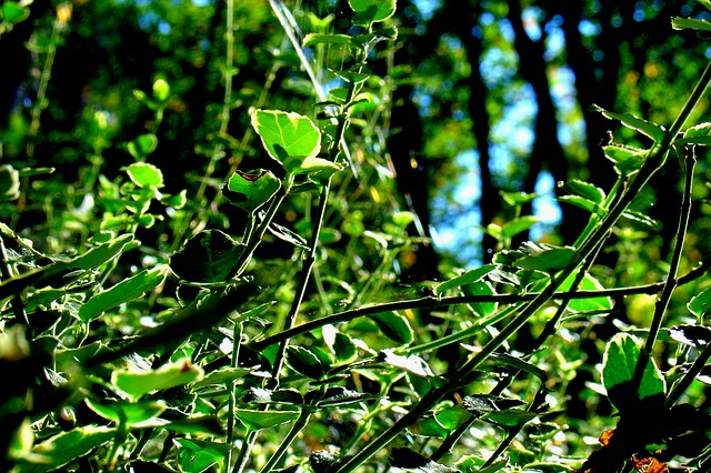 plant, nature, green, close