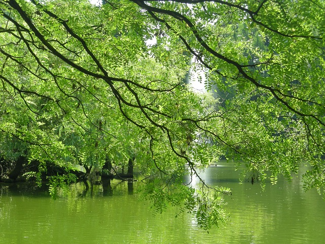 plant, nature, green, journal, leaves, tree, water, see