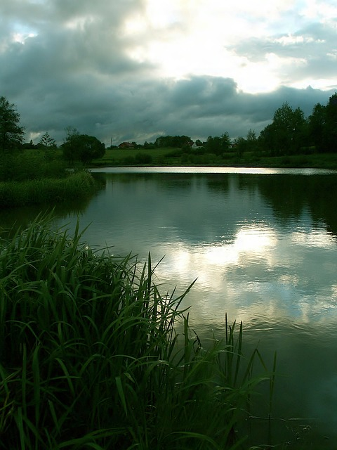 pond, water, reflection, sky, in the evening