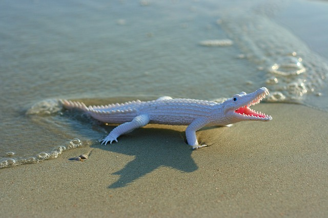 prop, alligator, toy, beach, sand, wave